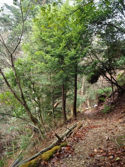 1登山道7
