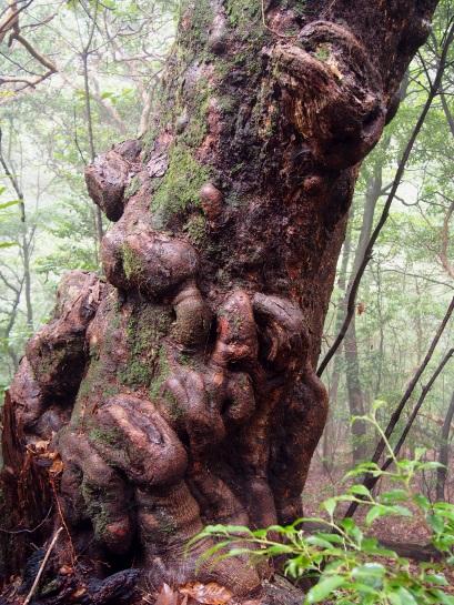 2途中の樹1-2