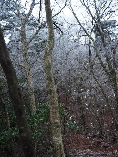 4登山道からの景色9