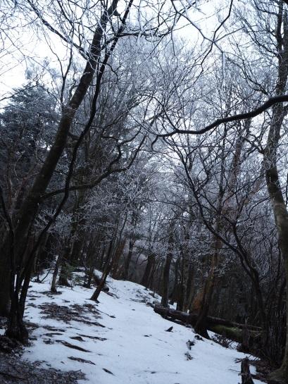 5登山道からの景色20