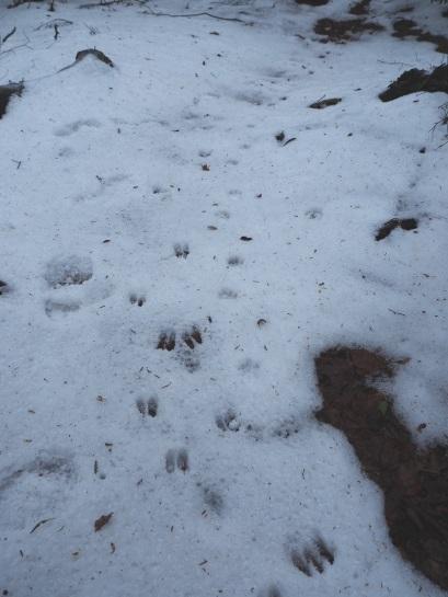 雪の足跡 (5)