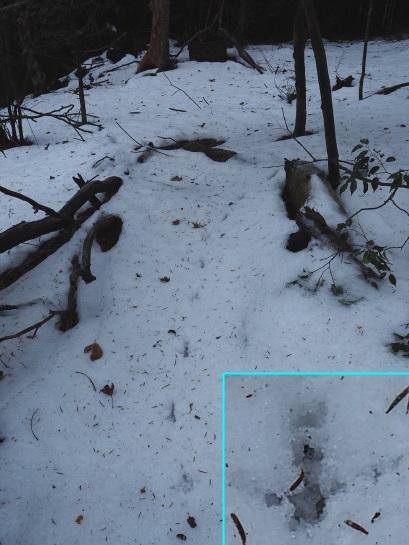 雪の足跡3