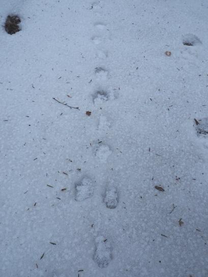雪の足跡 (11)