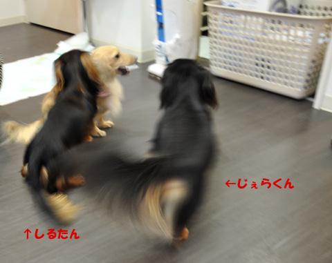 じぇらくん 4