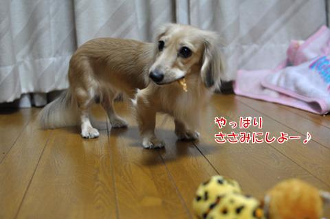 うちのこ記念日 5