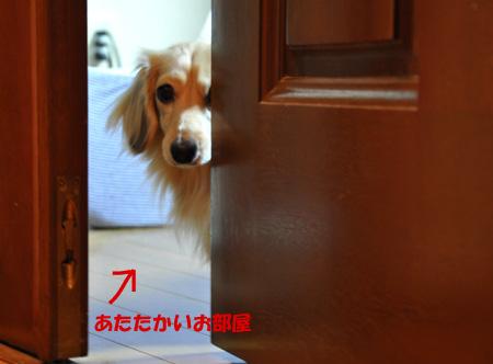 こたつむり 5