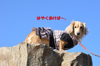 東尋坊 7