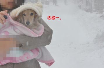 お犬様 5