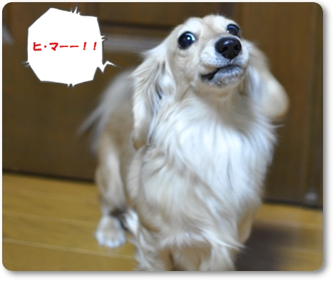初お散歩 3