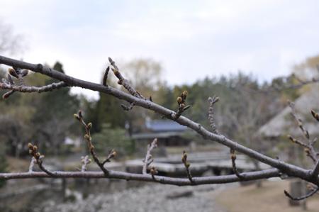 松任公園 13
