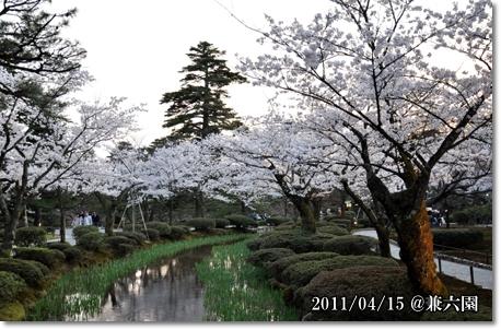 兼六園夜桜 2