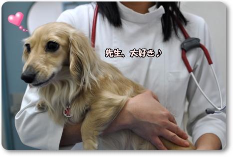 動物病院 3