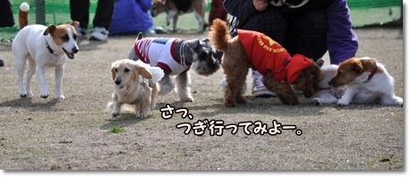 木場潟桜 058