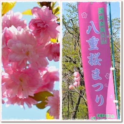 八重桜まつり