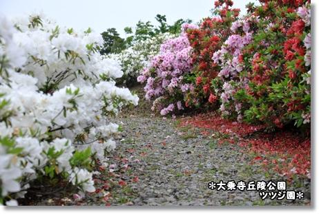 大乗寺つつじ園 079