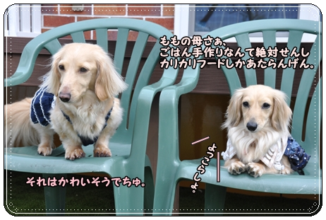 dog cafe MINT 052