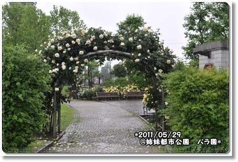 姉妹都市公園バラ園 170