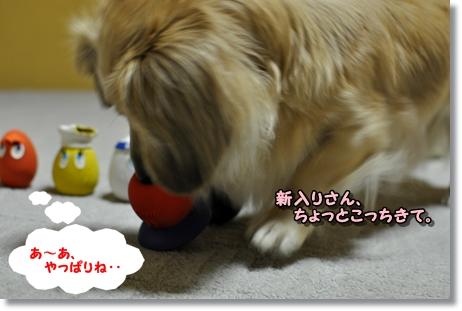 newたまごちゃん他 056