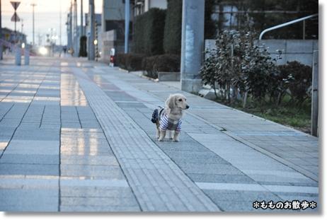 お散歩 025