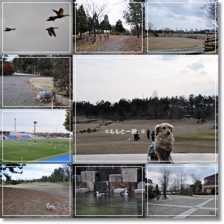 運動公園9-1
