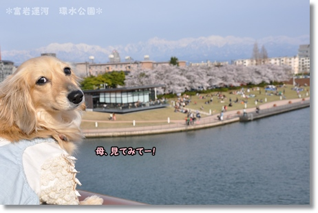 環水公園2012春 067
