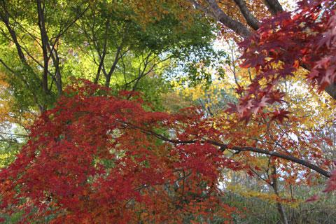 1211田貫湖の紅葉3