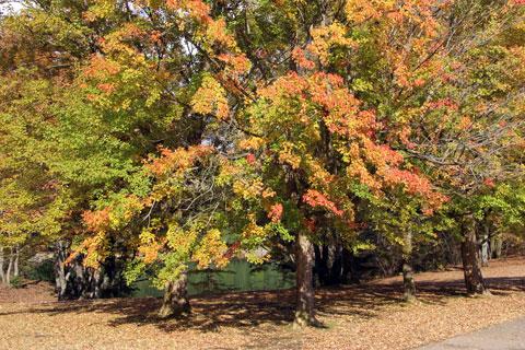 1211田貫湖湖畔の紅葉