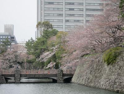 1303お濠端の桜