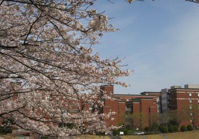 1303県立大と桜