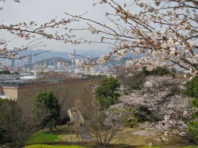 1303文化センターの桜2