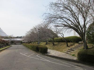 1303文化センターの桜まだま