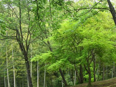 1304公園の緑
