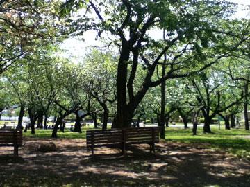 1304駿府公園