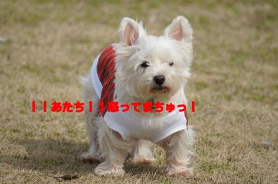 91NcG_kxcd3oyji[1]_convert_20120310181123