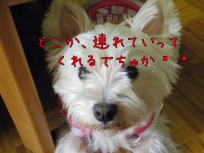 IMG_1032_convert_20120316171200.jpg
