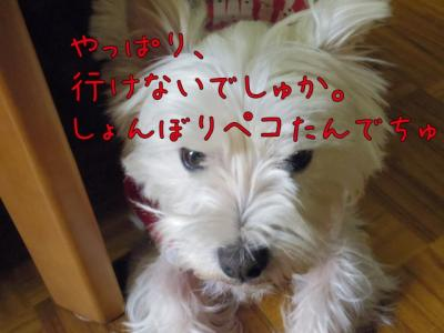 IMG_1034_convert_20120316171234.jpg
