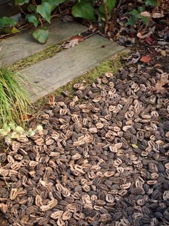 my-garden 035