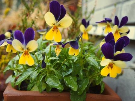 my-garden 072