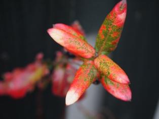 my-garden 029 (3)