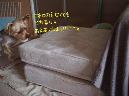 P3300716_convert_20120412232508.jpg