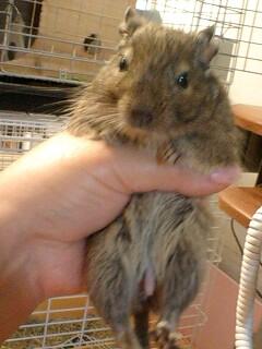 ネズミの男の子