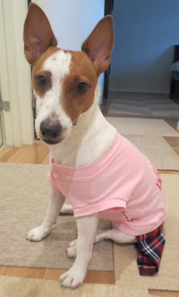 11月3日可愛い服を着るリリィ2