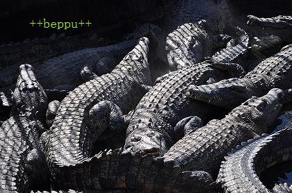 beppu (14)