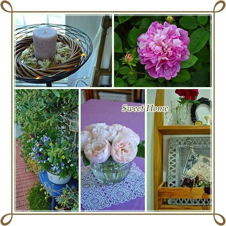Rose Garden8