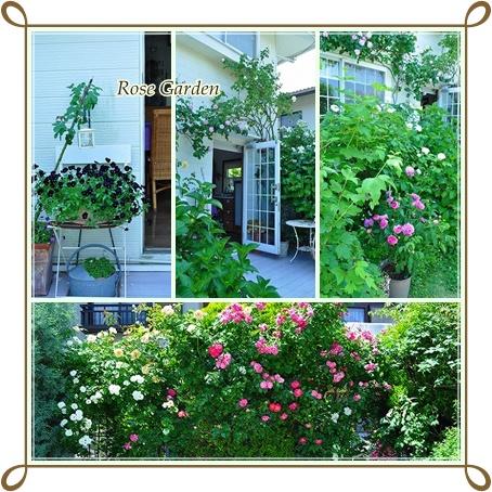 Rose Garden7
