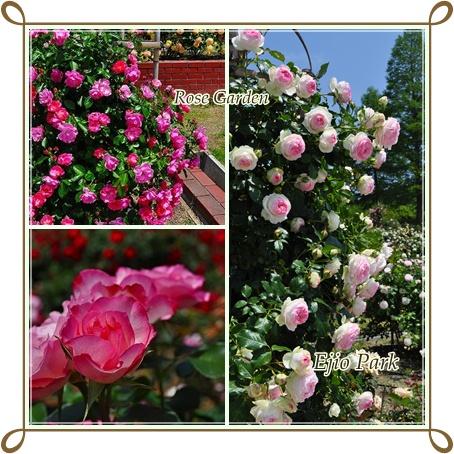 Rose Garden6