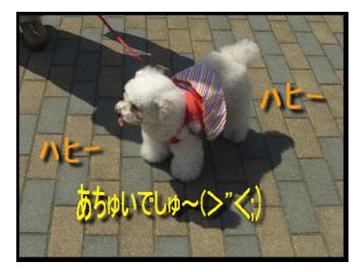 CIMG6491_02sc.png