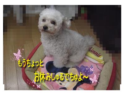 CIMG6698_sc.png