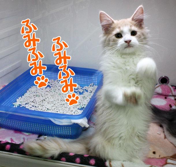 100330_今日のお猫様_2