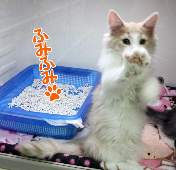 100330_今日のお猫様_1